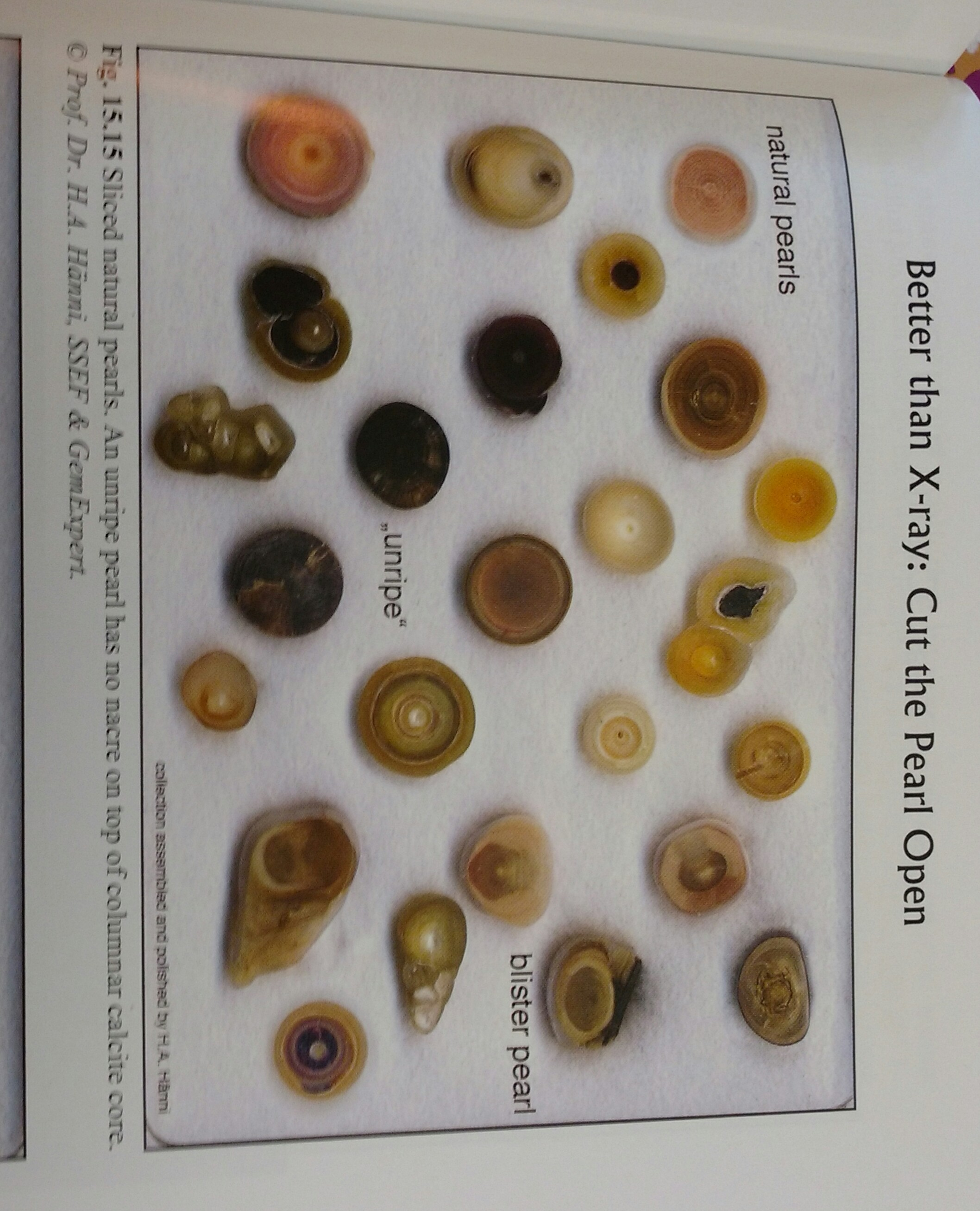 pages color tahitian chart types black pearls pearl normal kyllonen